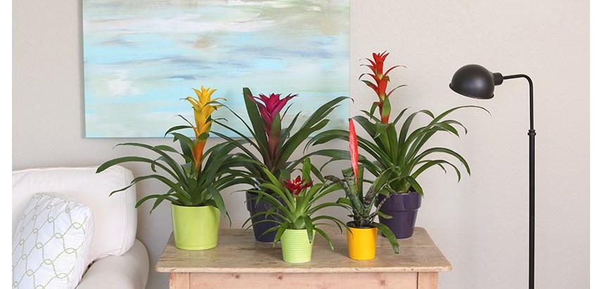 Image Result For Plants Low Light Bathroom