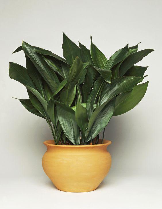 15 Best Low Light Indoor Plants