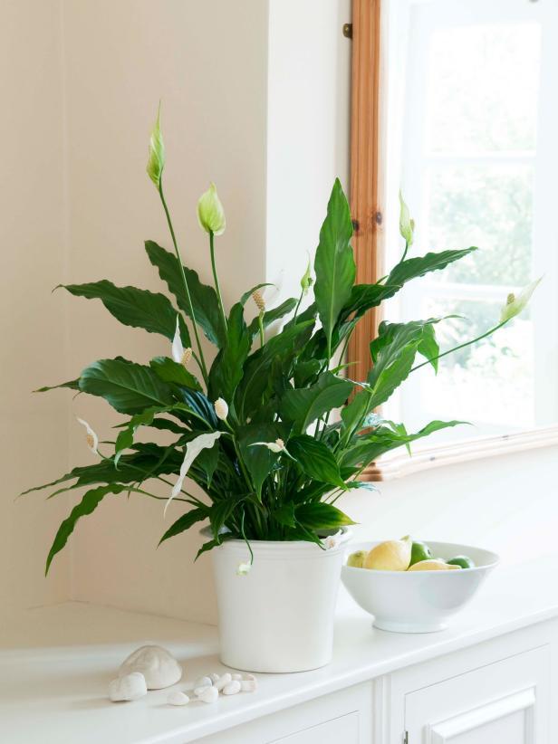 Best Low Light Indoor Plants (source)